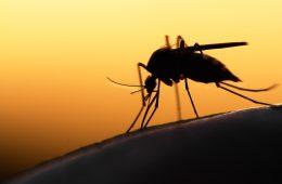 muggen